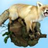 Как делают чучела животных?
