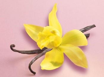 Магические свойства ванили