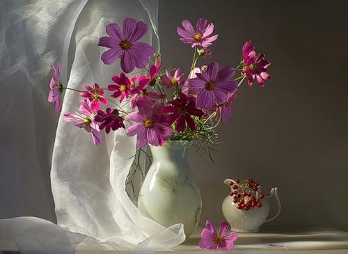 цветы космея фото: