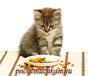 Сведения о сухих кормах для котят