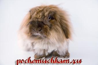 Как выбрать красивое имя для кролика