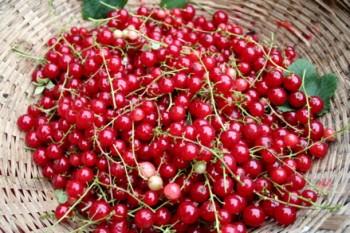Что приготовить из красной смородины