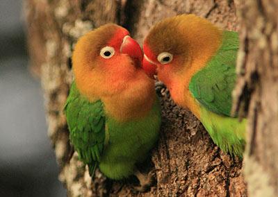 От чего защищают птицу перья
